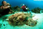 Scuba diving at te Passage betwenn Waigeo and Gam Island