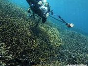 Diving at Pulau Kris's cape