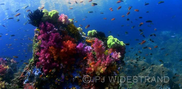 Liveaboard Raya Ampat Scuba Diving Indonesia