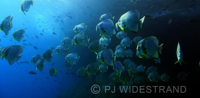 Raya Ampat - Scuba Diving liveaboard - Indonesia
